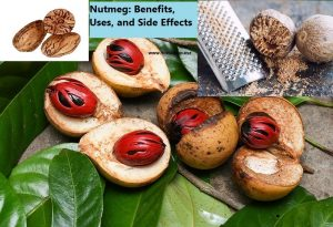 Nutmeg: Benefits, Uses and Side Effects
